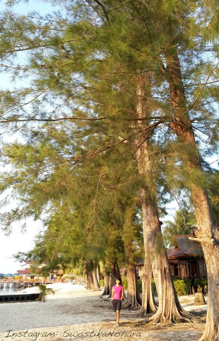 Derawan tall trees