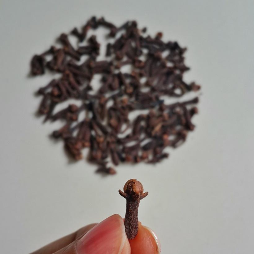 Cengkih (cloves) adalah tanaman asli Indonesia, banyak ditanam di kepulauan Banda, dan menjadi flora identitas Provinsi Maluku Utara. Pohon cengkih yang dianggap tertua kini berusia 416 tahun, masih hidup di Kelurahan Tongole, Kecamatan Ternate Tengah, Maluku Utara dan setiap tahun memproduksi sekitar 400 kg bunga cengkih. Foto oleh penulis.
