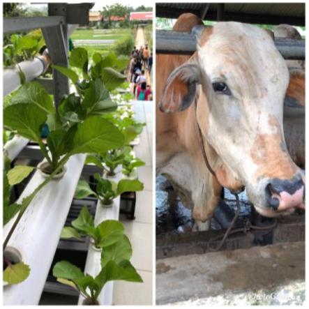 rapp pertanian hidroponik