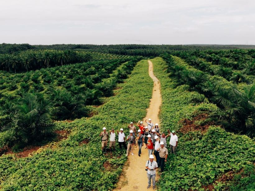 asian agri kebun sawit luas